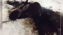 Rescuers Spent Hours Saving Horse From Icy Alberta