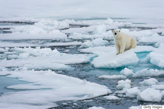 Polar Bears In Jeopardy Over Climate Change: U.S. Fish And Wildlife