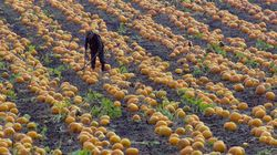 Seasonal Agricultural Workers Deserve Right To Call Canada
