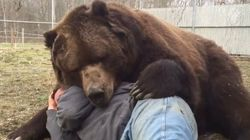 Bear Just Can't Contain The Love He Feels For His