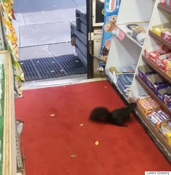 Toronto Convenience Store's Chocolate-Stealing Squirrels Caught On