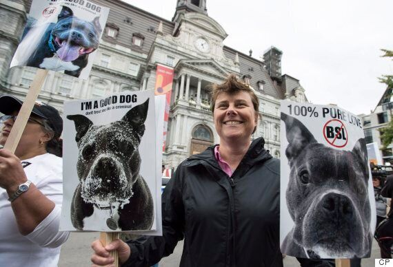 Montreal Pit Bull Ban Debate Continues As SPCA Vows To Halt Dog