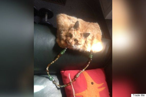 Dead Cat Handbag, Created By New Zealand Taxidermist, Sells For C$524