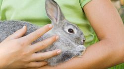 Canada Is One Step Closer To Banning Cosmetic Animal