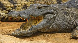 Crocodile Bites Tourist Who Ignored Warning