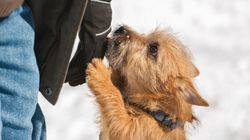 The 8 Unwritten Rules Of Off-Leash Dog