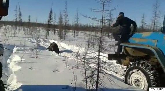 Video Shows Russian Bear Being Crushed To Death By