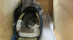 Canadians Sent Home For Trying To Smuggle Cat Into New