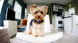 Pet-Loving Renters Have Rights,