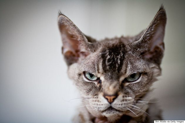 Cuddling A Cat Could Kill You, Horrible Study