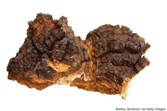 Chaga Health Benefits: 7 Reasons To Consume This