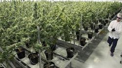 Huge Medical Marijuana Grow-Op To Be Built At Edmonton