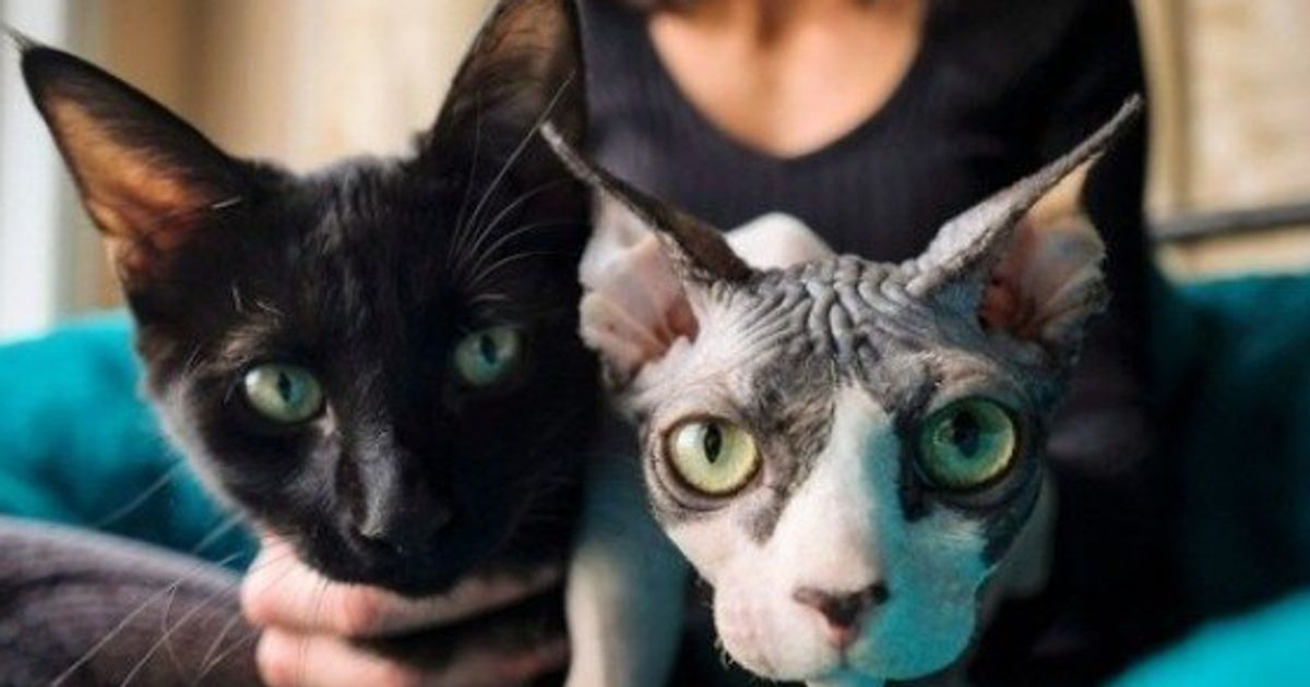 Hairless Cats And The Ugly Truth About Breeder Scams