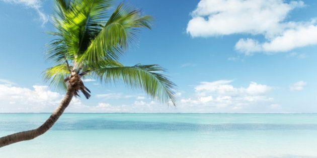 Caribbean sea and coconut