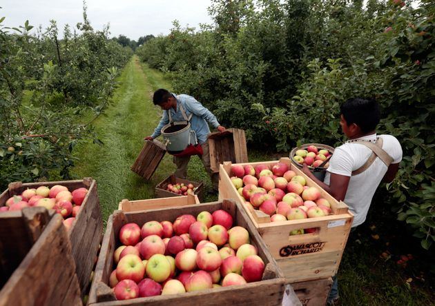 Apple Crop Threatened By Unusually Icy