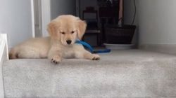 Puppy Totally Confused By