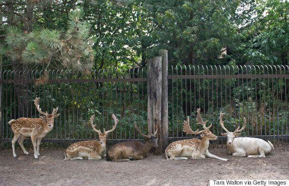 Marineland Denies 'Highly Unusual' Number Of Animal