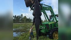 Huge Gator Killed In Florida One Of Largest Hunter Had Ever