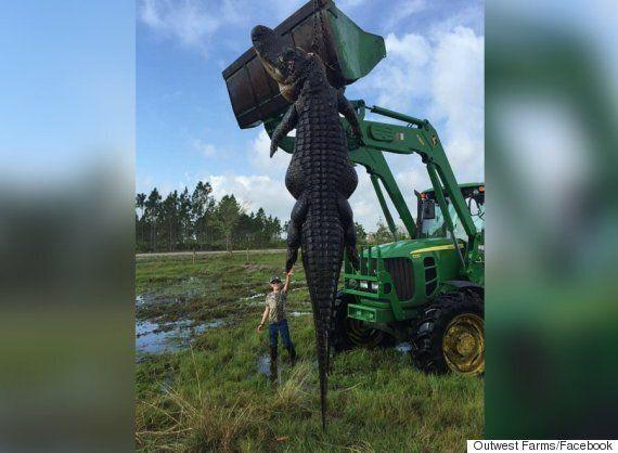 Florida Hunter Kills Five-Metre-Long Alligator That Was Eating