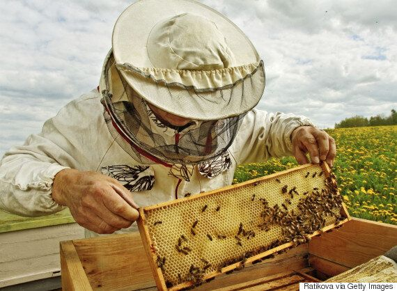 Billy Bee Honey Is Angering Canadians Like Loblaws Did Over French's