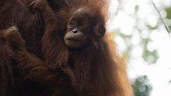 The Sumatra Wildlife