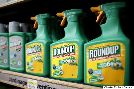 Bayer-Monsanto Deal Hints At Dark Future Of Corporate