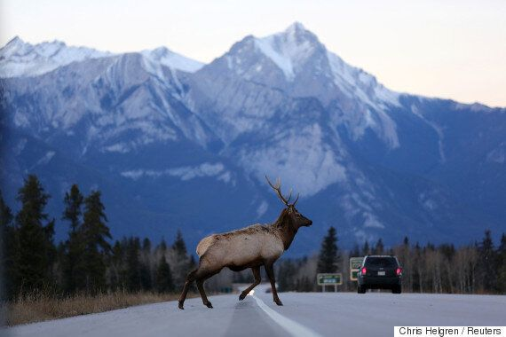 Trans Mountain Pipeline Never Spilled In Jasper: Kinder Morgan Alternative