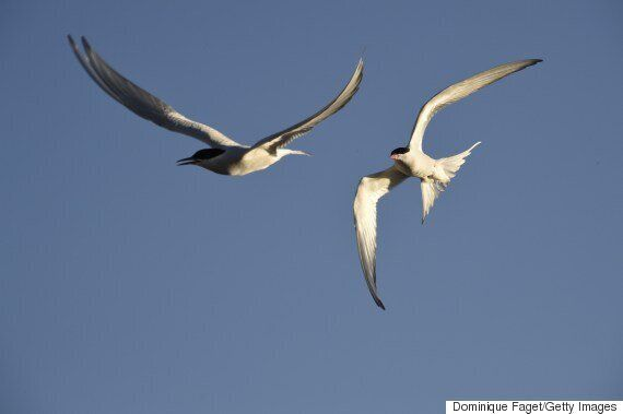 Bird Poop Could Have Cooling Effect On Warming Arctic: