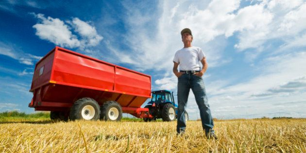a farmer standing in oat stubble in front of a tractor and grain wagon during the harvest, near Dugald,...