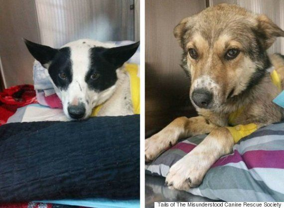 Kananaskis Country Dogs Recovering After Being Shot With