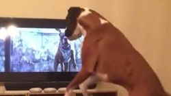 WATCH: Adorable Dog Mimics Jumping Dog He Sees On
