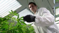 U.S. Voters Give Canada Its First Billion-Dollar Marijuana
