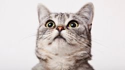 Owning A Cat Is Good For Your Health, According To