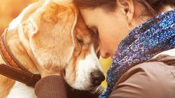 Fostering An Elderly Pet Boosts Love, Joy And