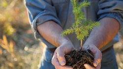Calgarians Say Planting Trees Will Encourage