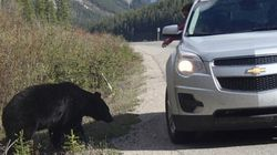 Bear Feeding Caught On Video Leads To $1,000