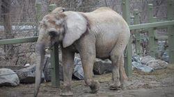 Former Toronto Zoo Elephant Dies In California