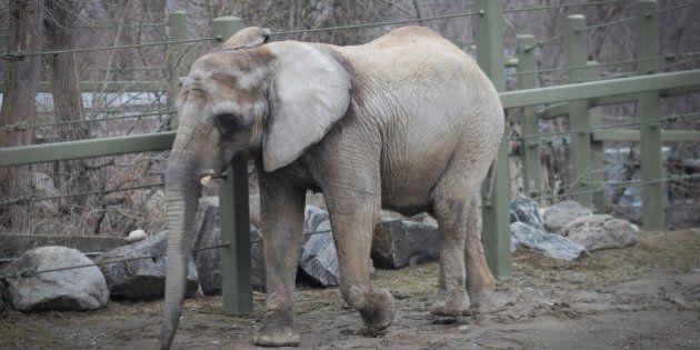 Former Toronto Zoo Elephant Iringa Dies In California