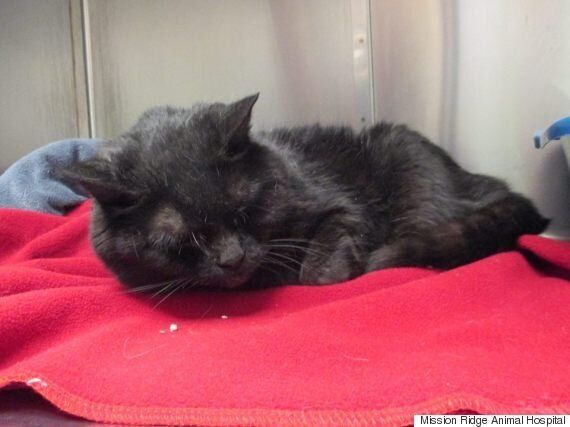 Cats Abandoned Inside Duct-Taped Bin In St.