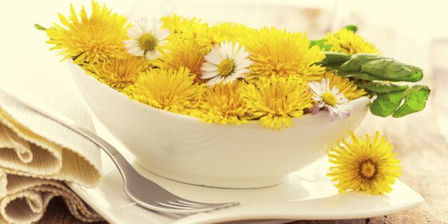 dandelion blossoms in a bowl - like a light