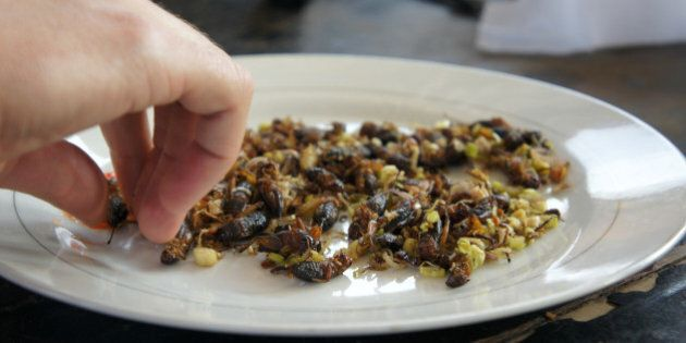 A tourist about to eat a plate full of fried crickets flavoured with lemon grassDalat,Vietnam
