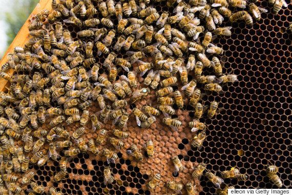 Honey Prices Plummet, And Beekeepers Are Blaming Chinese