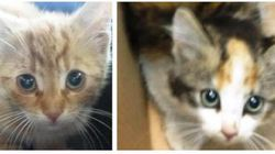 4 Kittens Found Sealed In A Box In Calgary