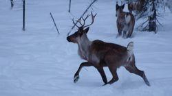 Ski Hill Expansion Could Threaten Alberta