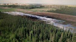 Dead Duck Found At Alberta Pipeline Spill