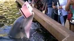 Dolphin Steals iPad, Reminds Us To