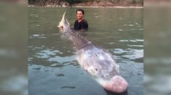 'Pig Nose' Sturgeon Is Helluva Catch For B.C.