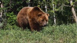 'Split Lip' Grizzly Gives Banff Hikers A