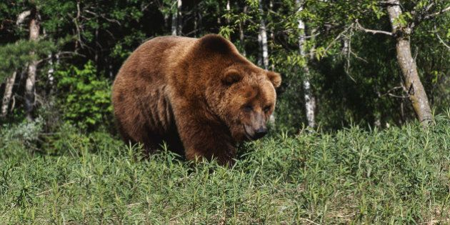Banff Grizzly Gives Hikers A