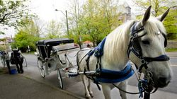 Group Petitions To Ban Horse-Drawn Carriages In